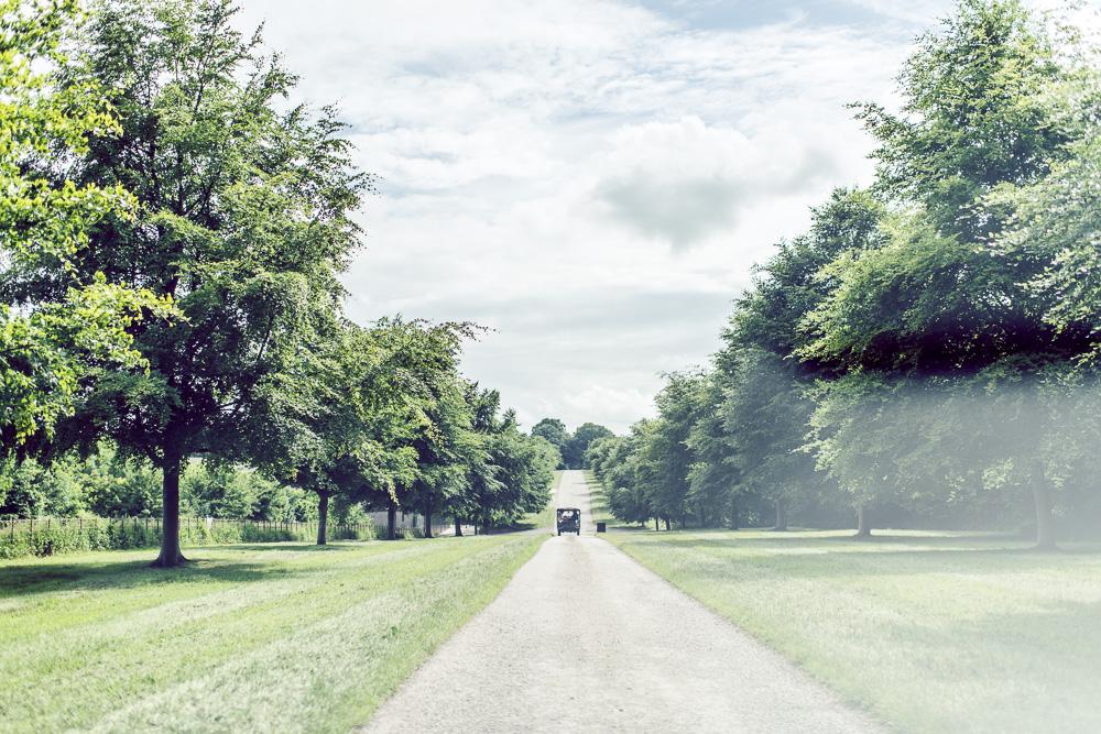 0097 Lamer Tree Wedding -_DSC5527